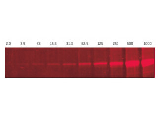 SYPRO<sup class=reg>®</sup> Red Protein Gel Stain